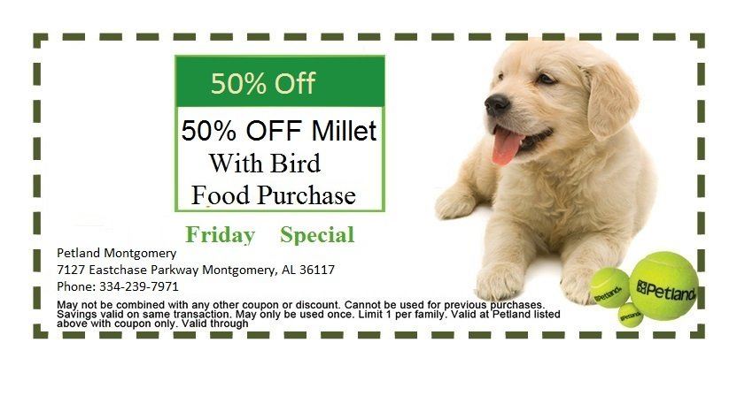 montgomery-friday-coupon-2