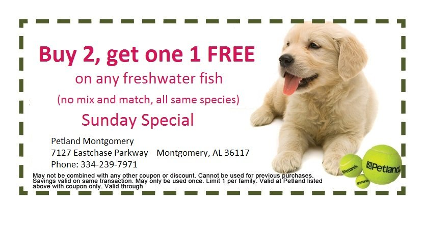 montgomery-sunday-coupon-1