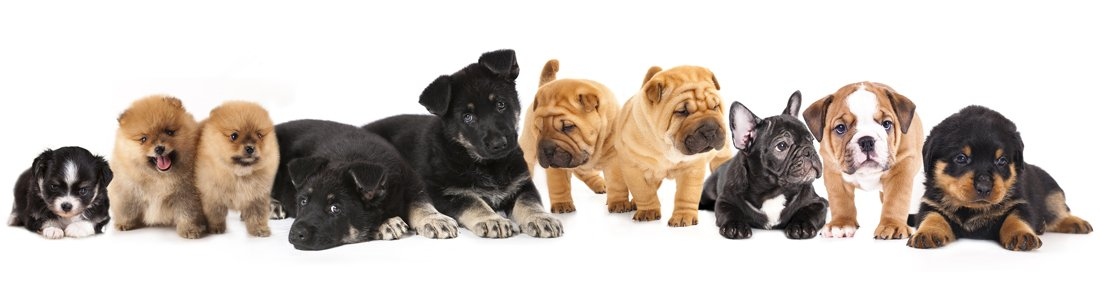 puppies for sale in Montgomery, Alabama